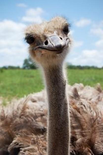 pico-de-avestruz_19-115957