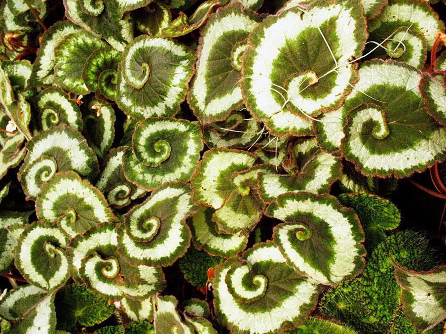 plantas-geometricas-12