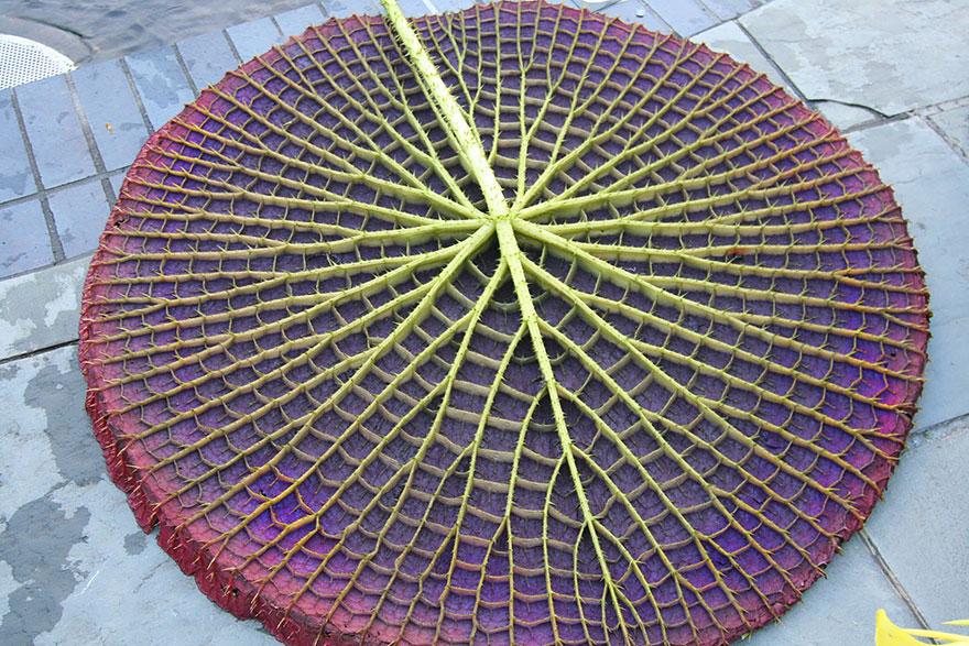 plantas-geometricas-18