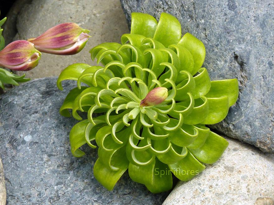 plantas-geometricas-20