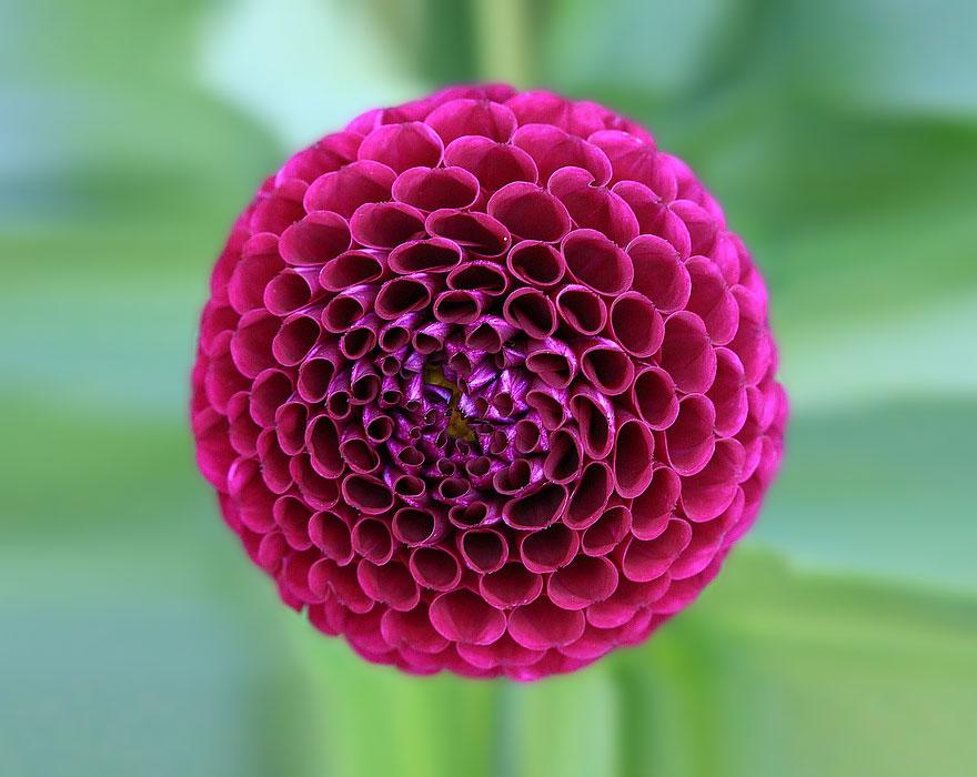 plantas-geometricas-4