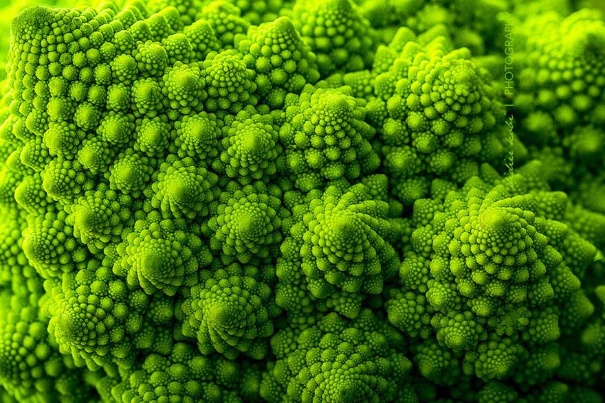plantas-geometricas-6
