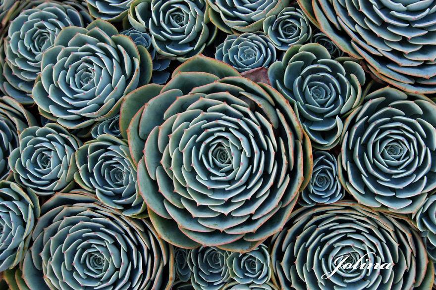 plantas-geometricas-9