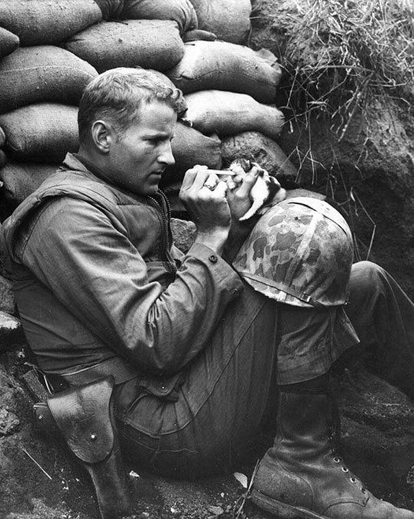 soldier-pet-resque-animal-war-14__605