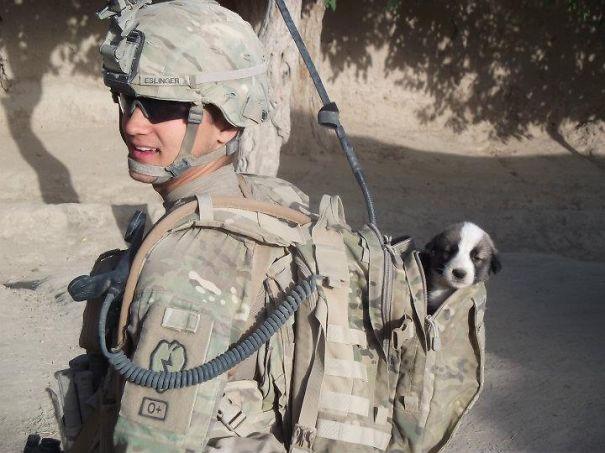 soldier-pet-resque-animal-war-18__605