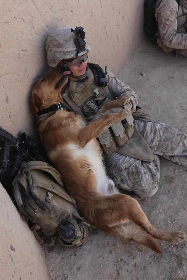 soldier-pet-resque-animal-war-9__605