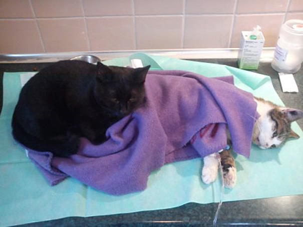 veterinary-nurse-cat-hugs-shelter-animals-radamenes-bydgoszcz-poland-3