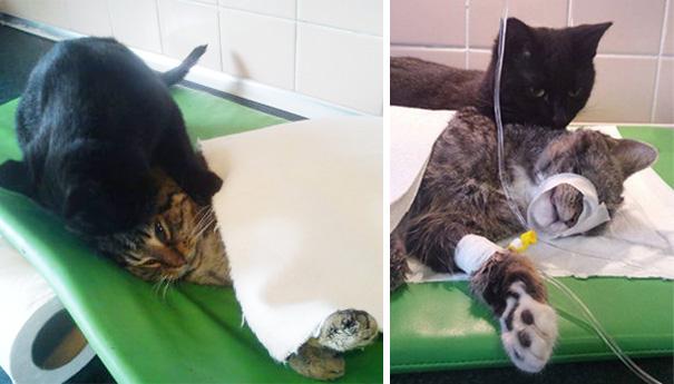 veterinary-nurse-cat-hugs-shelter-animals-radamenes-bydgoszcz-poland-6
