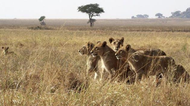 5-animales-que-se-convirtieron-en-verdaderos-heroes-y-cuyas-historias-necesitas-que-conocer-4