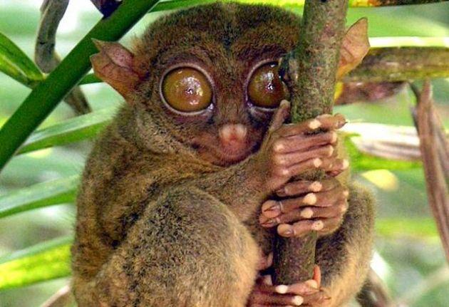 7-curiosas-y-adorables-especies-de-animales-que-quiza-no-sabias-que-existian-4