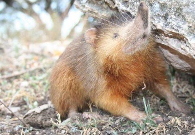 7-curiosas-y-adorables-especies-de-animales-que-quiza-no-sabias-que-existian-5