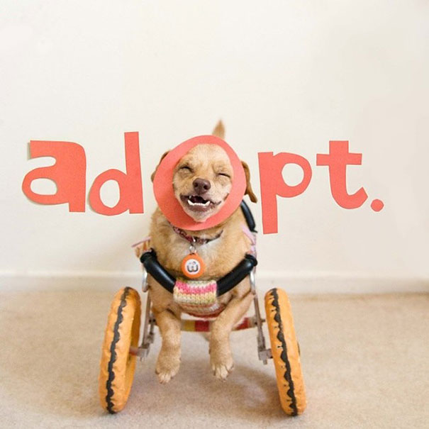 adopted-disabled-dog-daisy-underbite-unite-6
