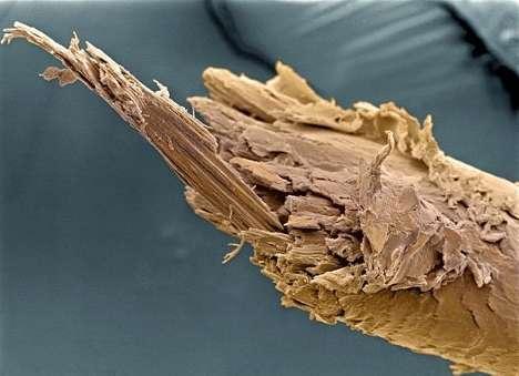 cosas-microscopio-13