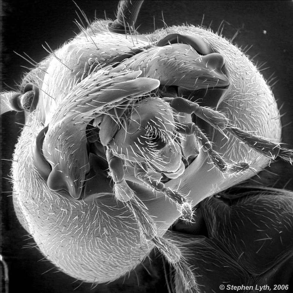 cosas-microscopio-18
