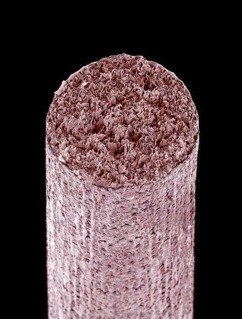 cosas-microscopio-22