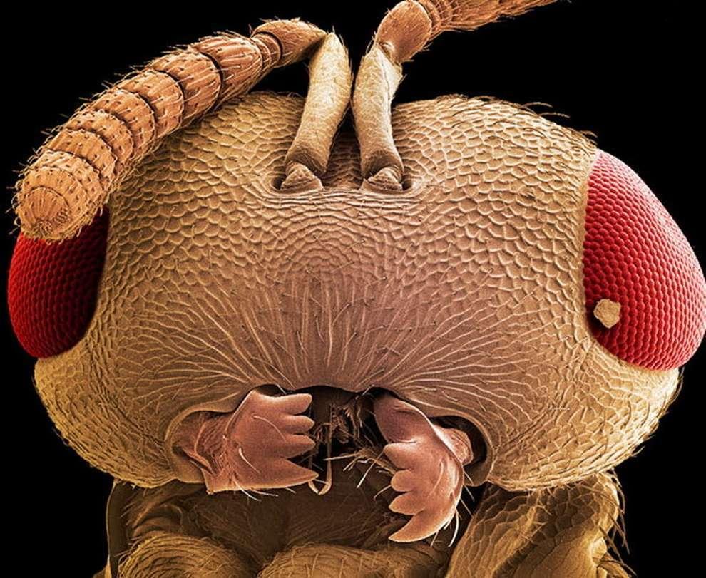 cosas-microscopio-29