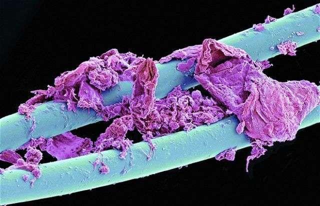 cosas-microscopio-35