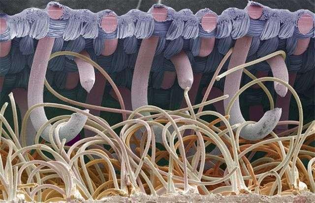 cosas-microscopio-6