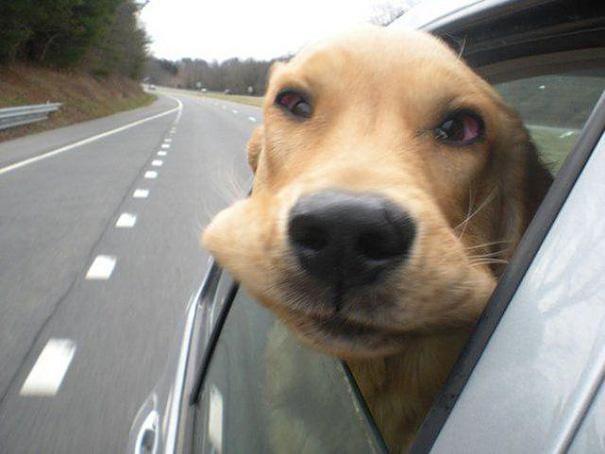 dogs-on-joyrides-15__605
