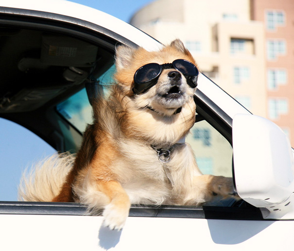 dogs-on-joyrides-22__605