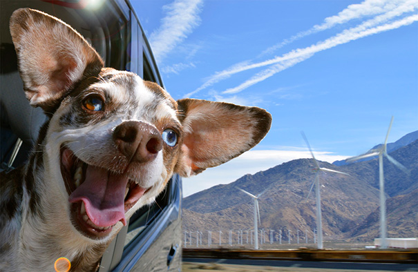 dogs-on-joyrides-2__605