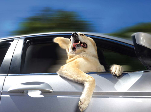 dogs-on-joyrides-33__605