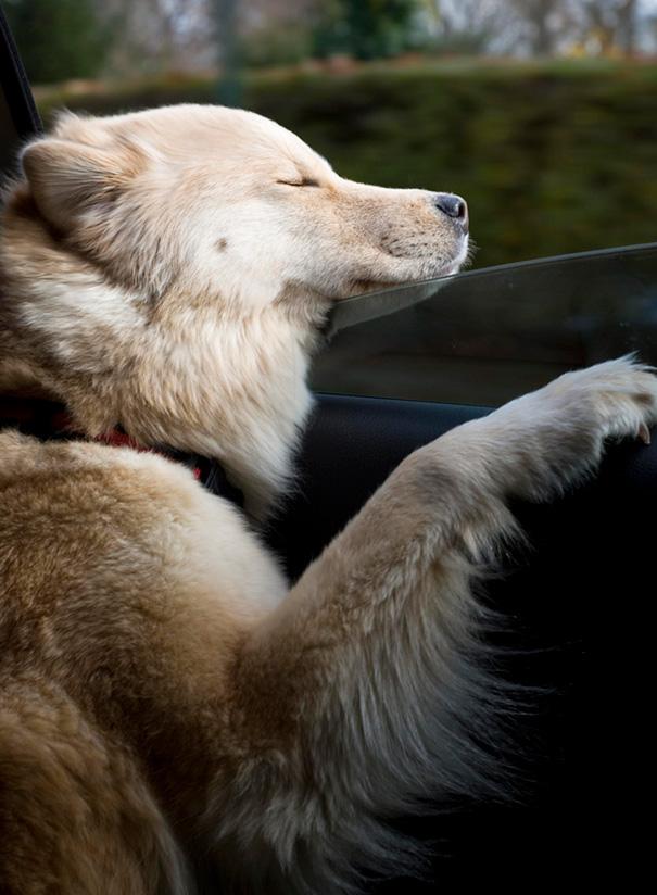 dogs-on-joyrides-35__605