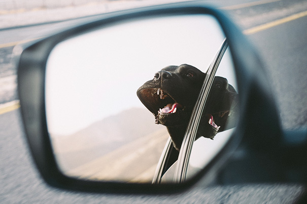 dogs-on-joyrides-39__605