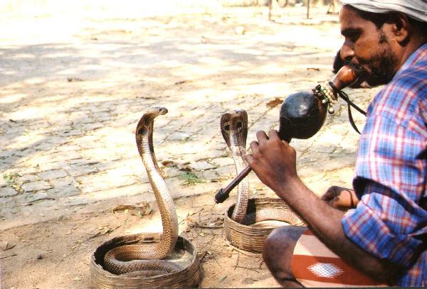 encantador-serpientes-flauta-snake-charmer