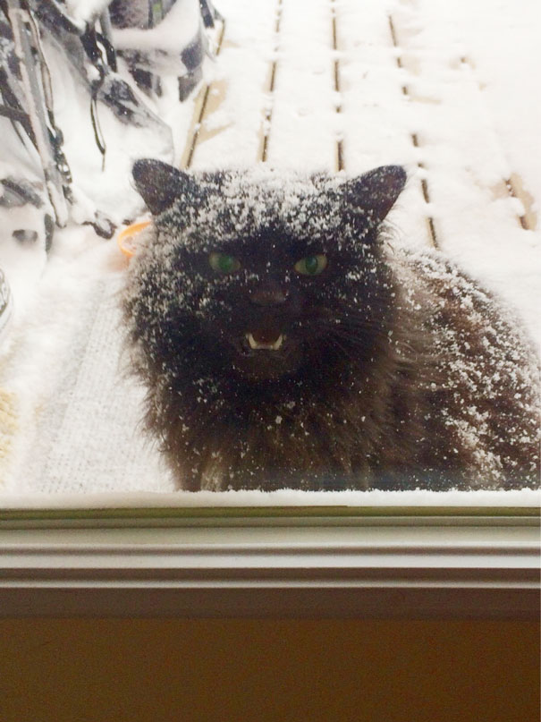 funny-animal-outside-door-let-me-in-17__605