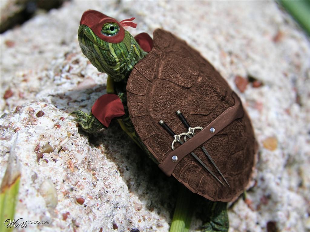 real_life_ninja_turtle