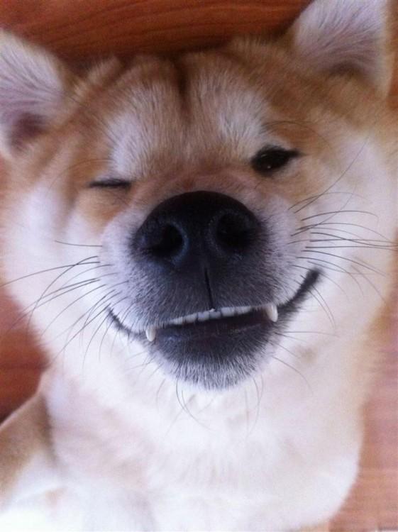 selfies-de-perros-13-561x750