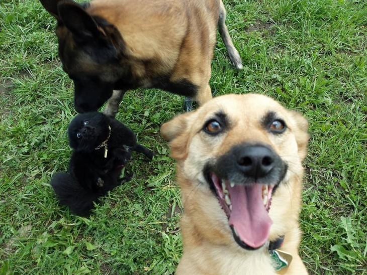 selfies-de-perros-22-730x548