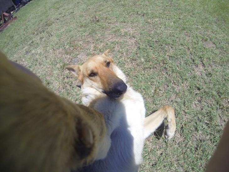 selfies-de-perros-25-730x548