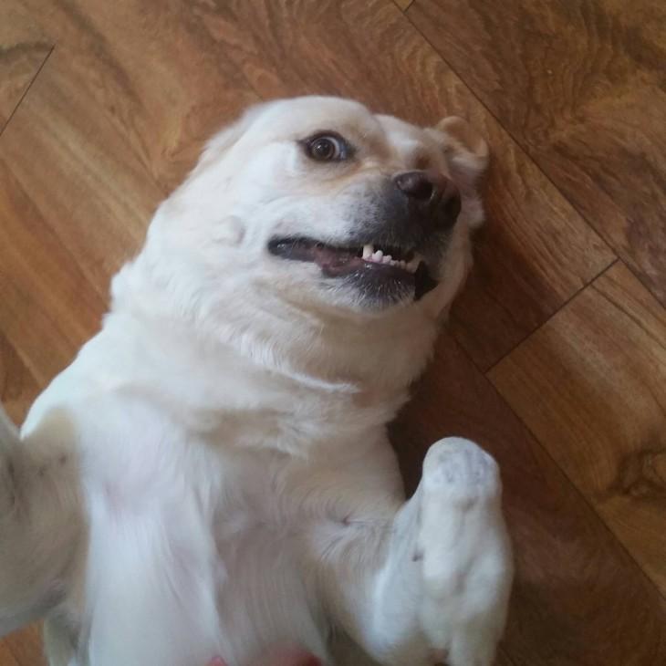 selfies-de-perros-4-730x730