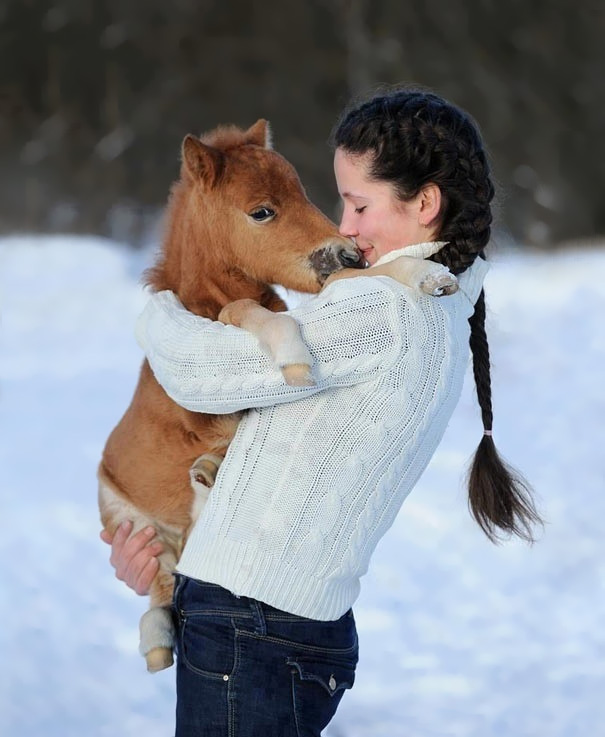 tiny-horses-10__605