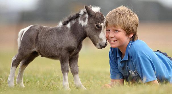 tiny-horses-12__605