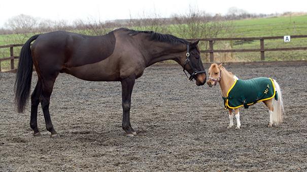 tiny-horses-30__605