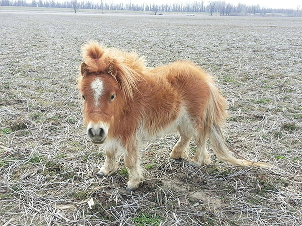 tiny-horses-5__605