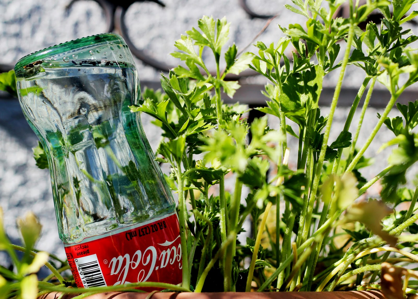 usos-bebida-cola-14
