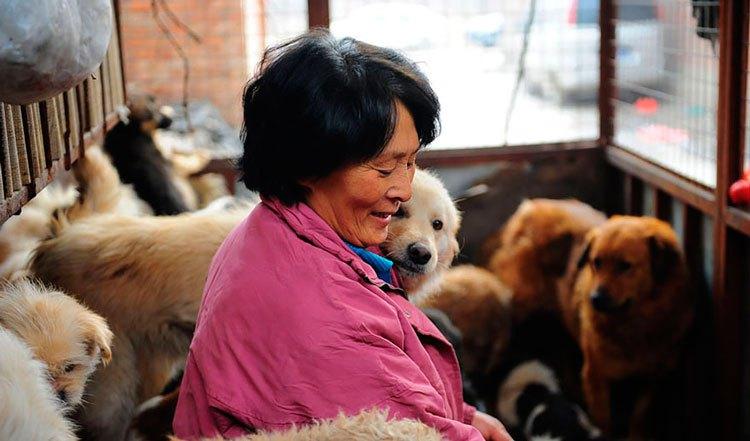 100-perros-salvados-festival-carne-perro-yulin-17