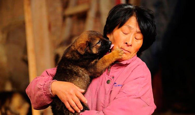 100-perros-salvados-festival-carne-perro-yulin-19