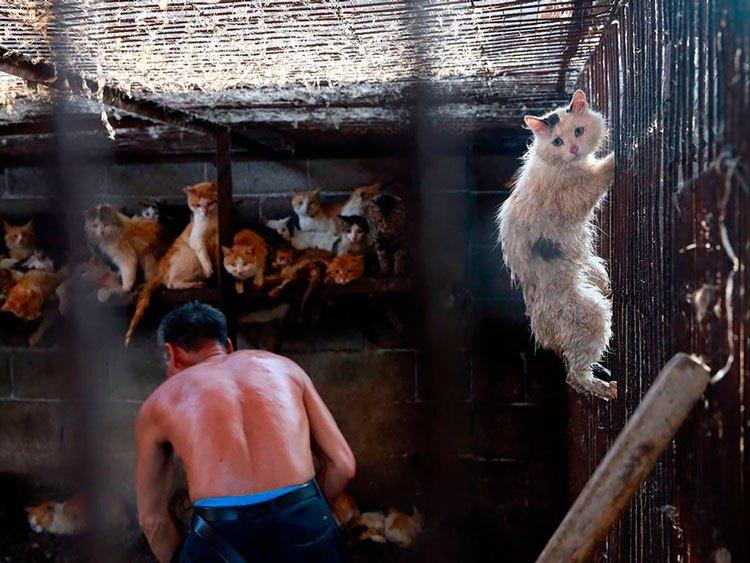 100-perros-salvados-festival-carne-perro-yulin-21