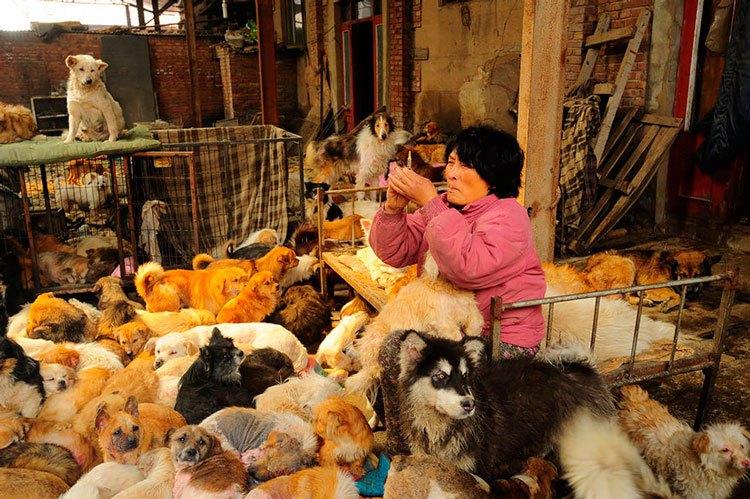 100-perros-salvados-festival-carne-perro-yulin-7