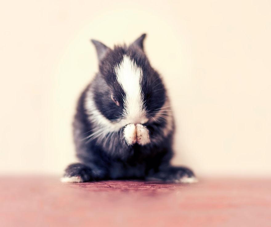 16 Fotos que resumen el crecimiento de un conejo en 30 dias