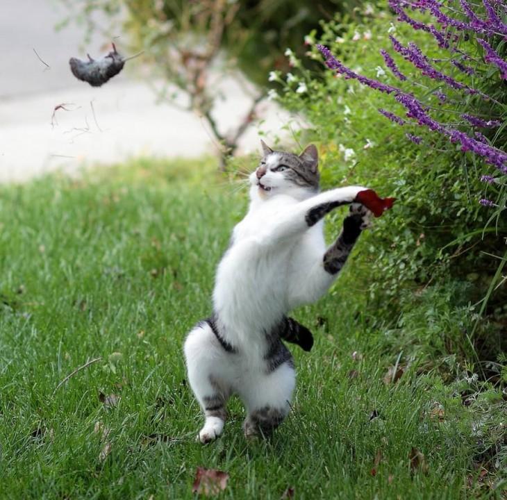 25-fotos-preciso-parte-5-gato-ball-730x720