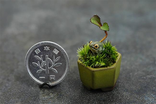 Mini-jardines-1