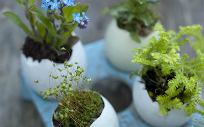 Mini-jardines-2