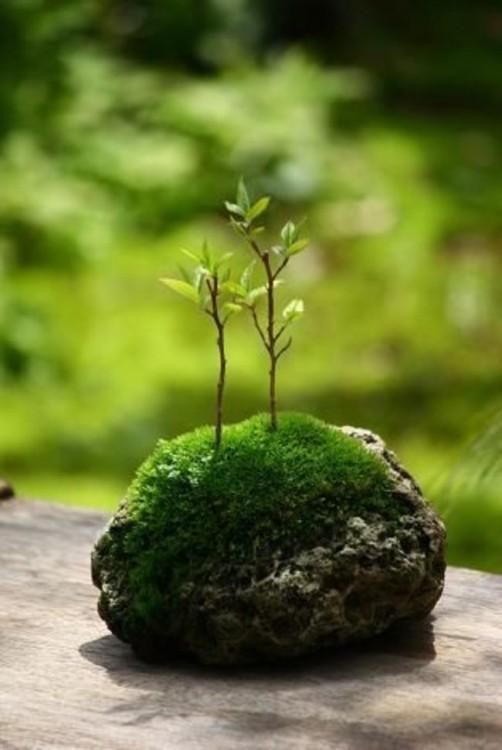Mini-jardines-4-502x750