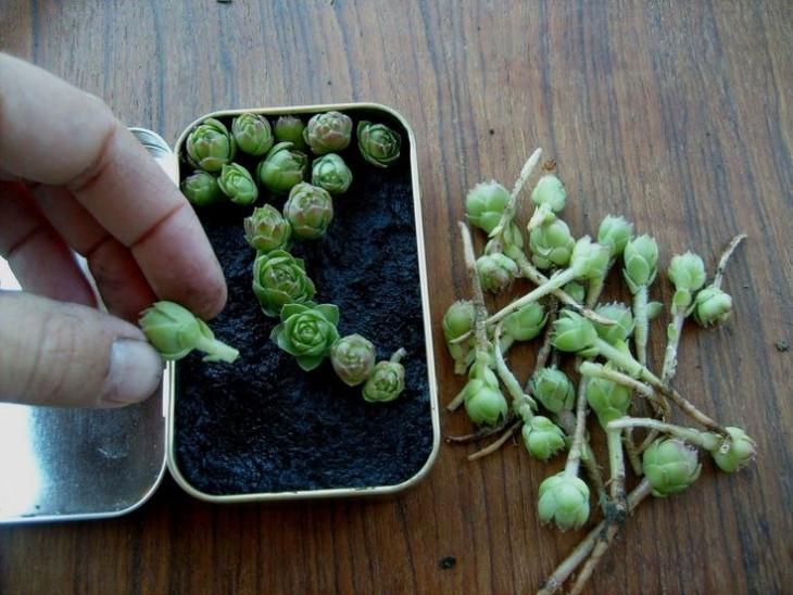 Mini-jardines-6-730x548